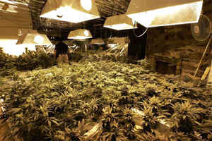 Indoor pot operating using sophisticated irrigation, ventilation and lighting <font size=-2>(Source: LA Times)</font>