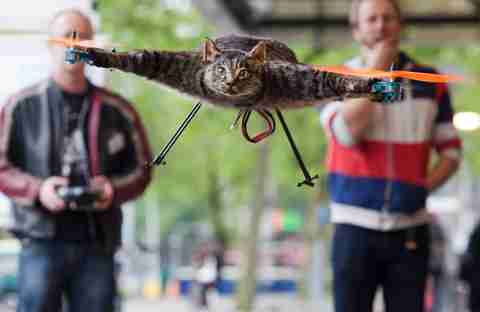 Bart Jansen guides his pet cat Orville via wireless remote control (Reuters)