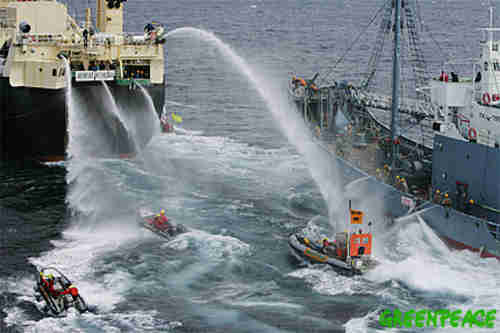 A boat full of Greenpeace activists being sprayed by a water cannon
