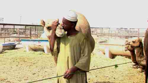 Camel traders can become infected with MERS by contact with camels (BBC)