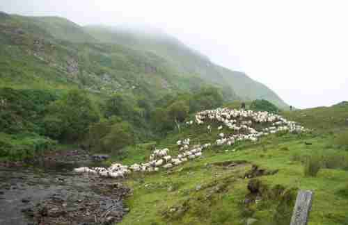 Turnalt sheep farm at the bottom of a U-shaped glen in Argyll, Scotland