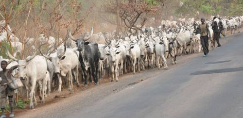 Fulani herders in Nigeria (royaltimes.net)