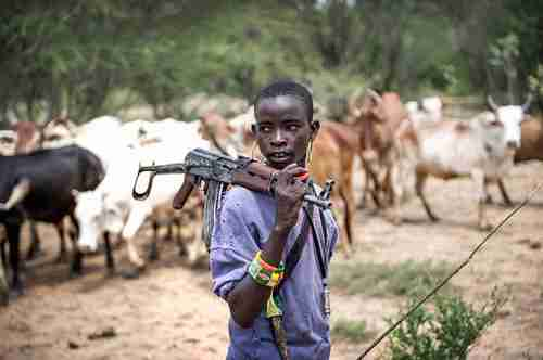 Boy guarding herd of cattle in Nigeria