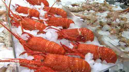 Australian crayfish are one of the products targeted by China (9News)