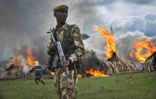 Pyres of ivory burn in Nairobi National Park in Kenya on Saturday (AP)